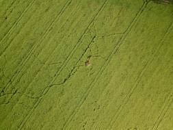 Beaufort Drone inspection photo dégat de gibier colza Berry Chateauroux