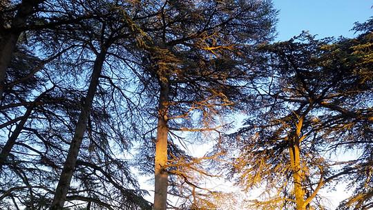 Photo drone Poitiers parc foret cedres