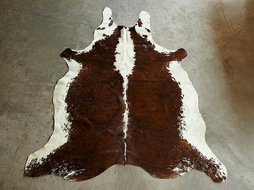 P24- 3,66 m2 Tigrée et ventre blanc