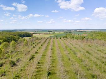 Beaufort Drone photo plantation chênes américain suivi croissance arbres malades Berry Chateauroux Vierzon Bourges