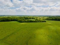 Beaufort Drone photo de prairies et massif forestier en Berry dans l'Indre Chateauroux