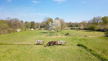 Photo Beaufort Drone Centre equestre Poi