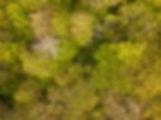 Beaufort Drone photo d'une parcelle bois