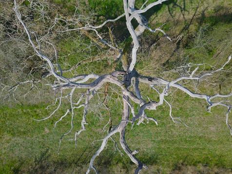 Beaufort Drone photo d'une chêne mort en Berry paysage nature flore