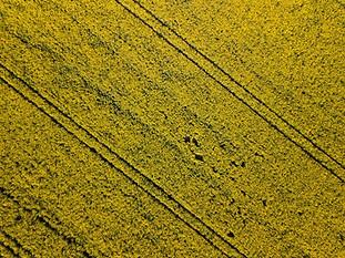 Beaufort Drone photo d'une parcelle de colza en Berry près de Chateauroux