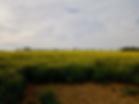 Beaufort Drone photo d'une parcelle de c