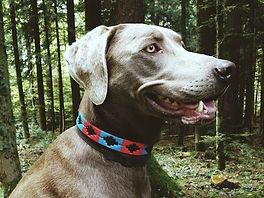Collier polo pour chien en cuir d'Argentine, brodé main, modèle bleu rouge, cuir brun