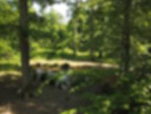 Photo video aerienne par drone faune flor nature paysage campagne à Poitiers Vienne