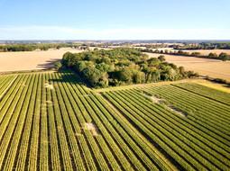 Dégâts de gibiers vus par drone sur parcelle de maïs à Niort, Deux Sèvres 79