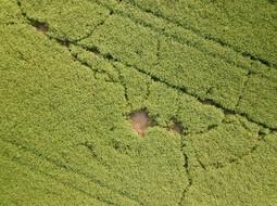 Beaufort Drone inspection photo dégat de gibiers cultures colza Berry Chateauroux
