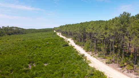 Photo prise par drone d'un massif ONF dans les Landes