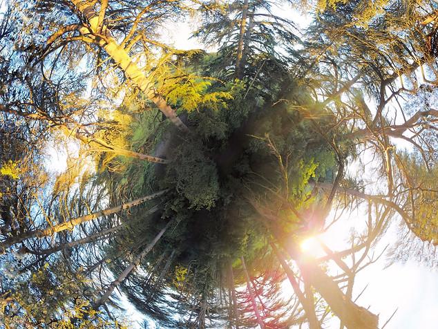 Photo pabnoramique 360° par drone d'une forêt de cèdres, Limoges, Haute Vienne 87