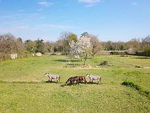 Reportage thematique photo drone activité campagne paysage club equestre élevage Poitiers Vienne