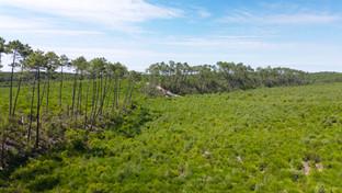 Photo prise par drone d'une forêt dans les Landes