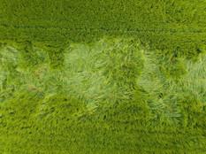 Beaufort Drone photo à l'aplomb dégât culture flore Beauce Orléans