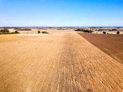 Vue par drone d'une parcelle de maïs