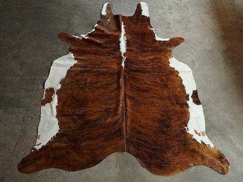 P34- 3,73 m2 Tigrée marron et ventre blanc