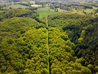 Photo par drone d'une propriété de chasse pour agence immobilière à Poitiers, Vienne 86.