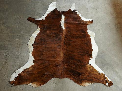 P33- 3,02 m2 Tigrée marron et ventre blanc