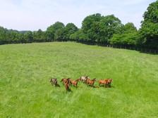 Exemple de photo par drone pour la promotion d'activité d'élevage à Poitiers Vienne 86