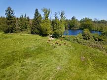 Beaufort Drone photo nature paysage étang faune flore élevage Limousin Limoges Bellac