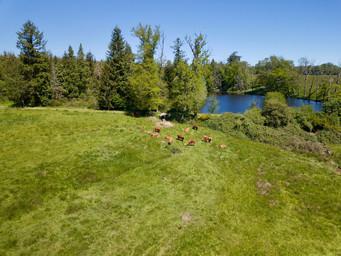Photo nature et paysage par drone, d'un étang et domaine en Limousin Limoges en Haute Vienne 87