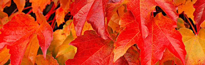 Fall%20Leaves_edited_edited.jpg