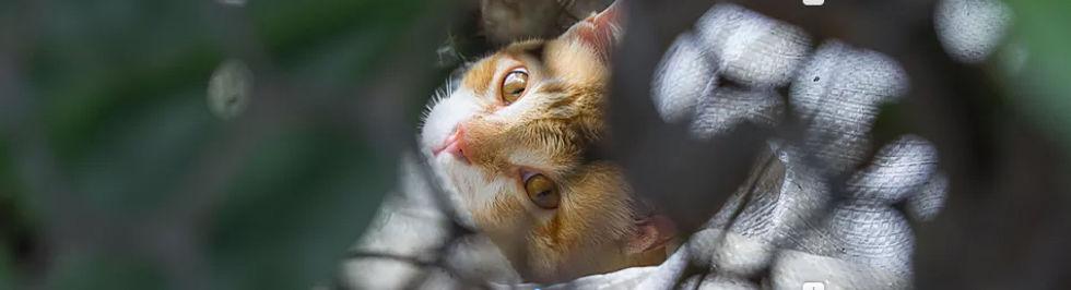 Van zwerfkat naar huiskat