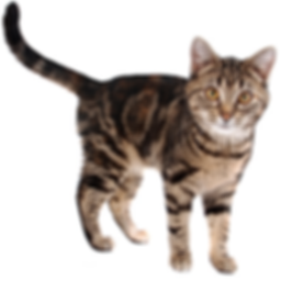 Dierenbescherming katten