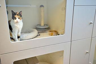 Moderne kattenopvang