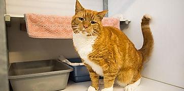 Kat in dierenopvang