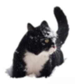 Winterhup voor zwerfkatten Stichting Amsterdamse Zwerfkatten
