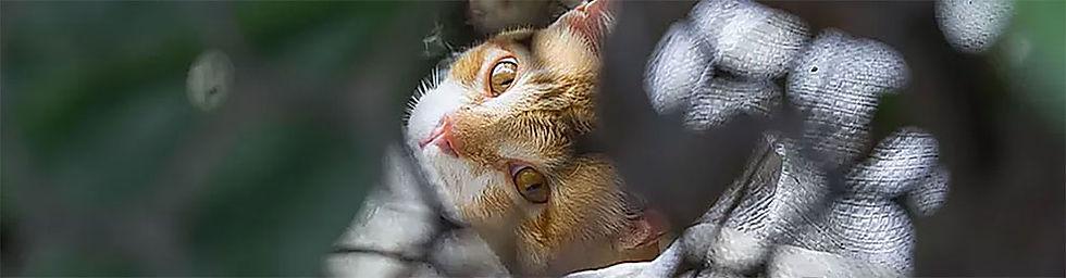Kat-gevangen.jpg