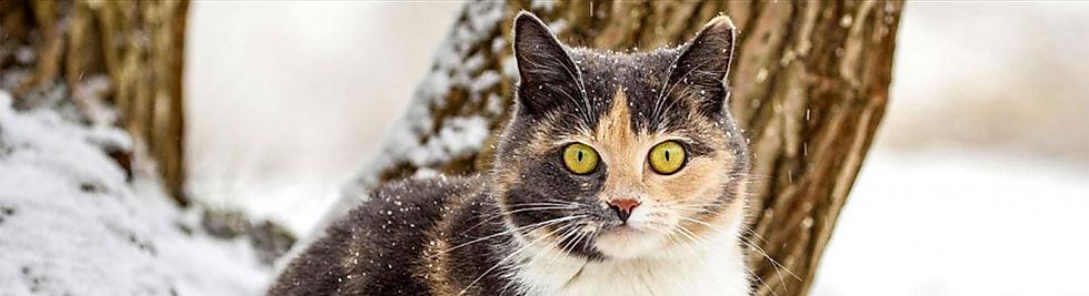 Kat-in-de-sneeuw.jpg