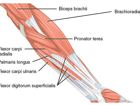 Corpo humano e os vestígios da evolução: um breve comentário