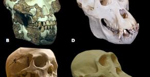 Evolução da dieta dos Humanos e as promessas das dietas modernas
