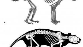 """Primeiro olhar sobre o esqueleto completo do Thylacoleo, o """"leão marsupial"""" extinto da Austrália"""