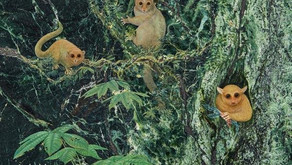 Identificadas três novas espécies de primatas pré-históricos