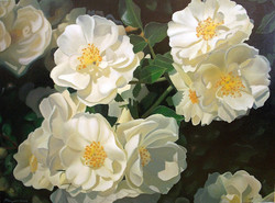 Дикая роза 80х110
