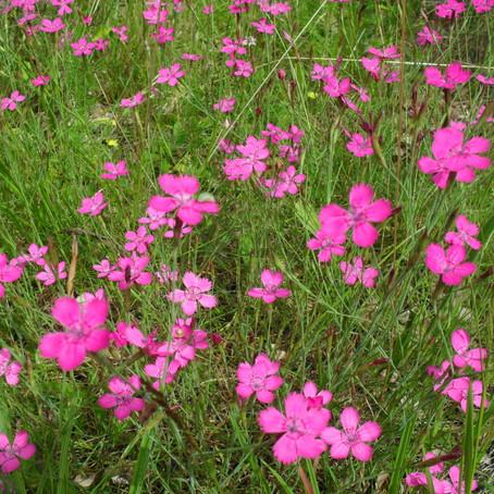 Jede Blüte zählt! Deswegen: mitmachen am 14.3.
