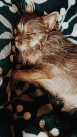 Photo of tan dog on teal green blanket - dog belongs to Makayla, wedding photographer