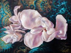 Grattan Magnolias
