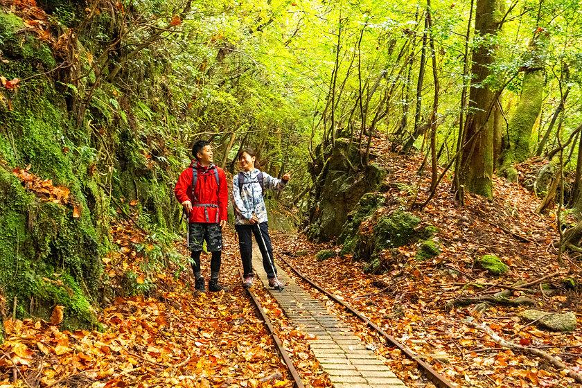 秋とトロッコ道-1.jpg