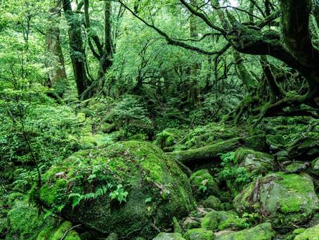 7月1日、屋久島観光再開