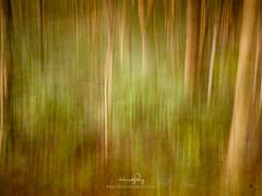 Impressionist Jungle