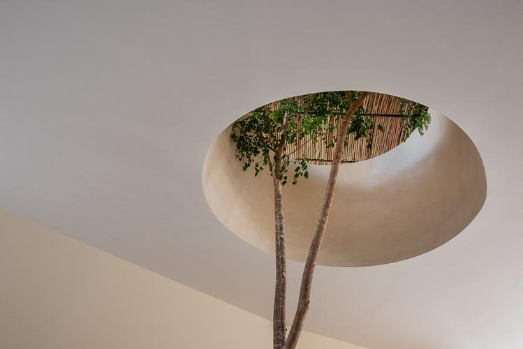 Copal Tulum árbol