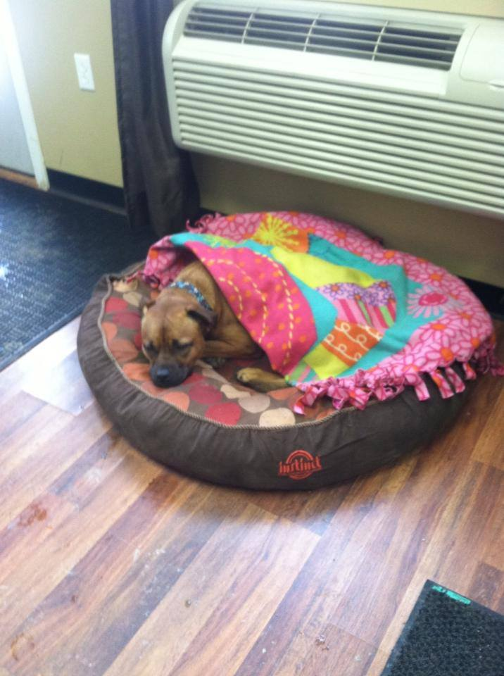 Bella taking a nap in the office