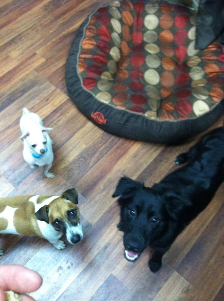 Iris, Zoey, and Timmy in the office