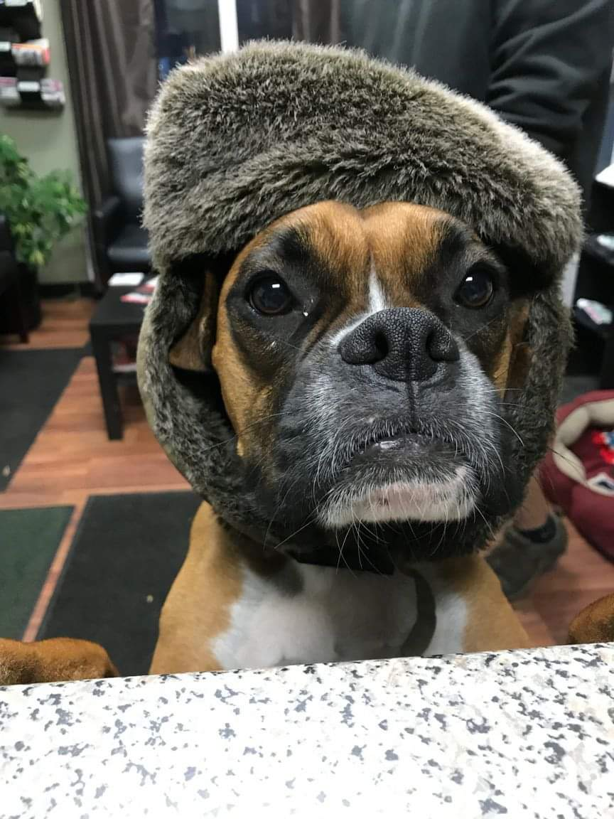 Charlie's ready for winter