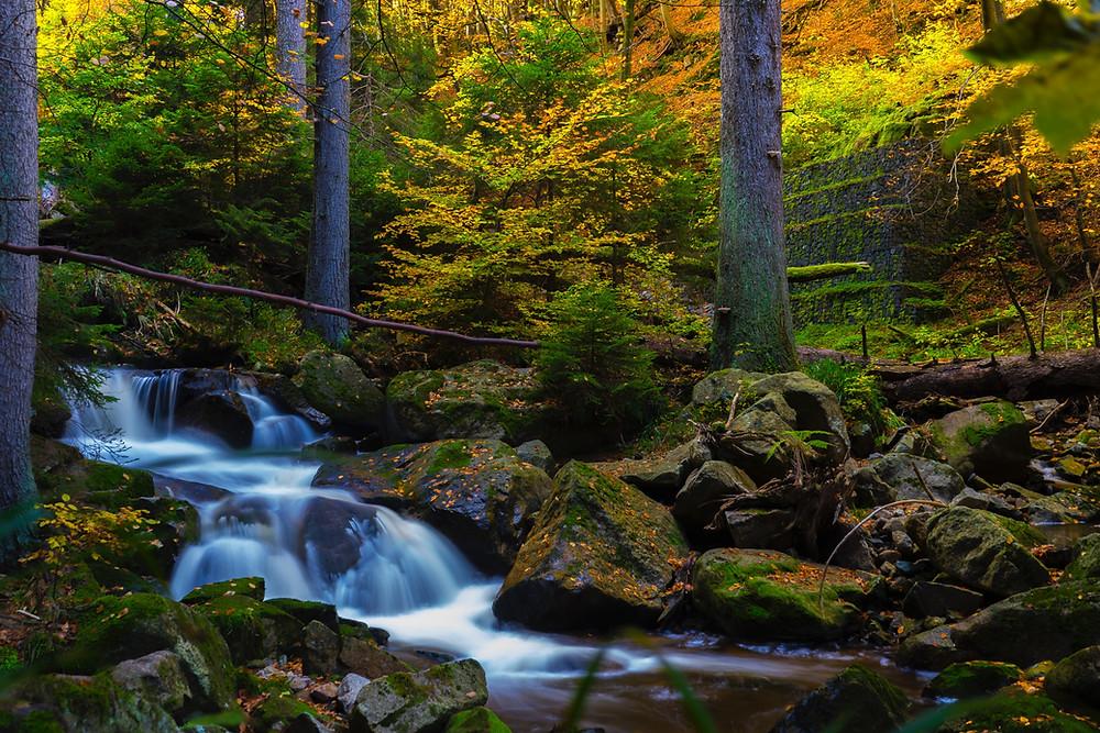 Nature's beauty, rich autumnal colours, joy of nature,